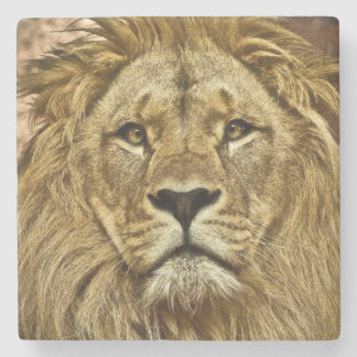 Lion portrait stone coaster