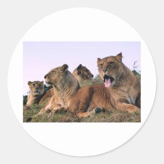 Lion Pride Classic Round Sticker