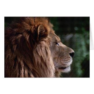 lion profile card