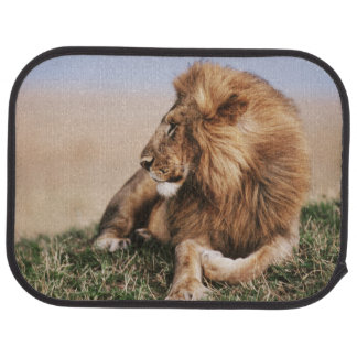 Lion resting in grass car carpet