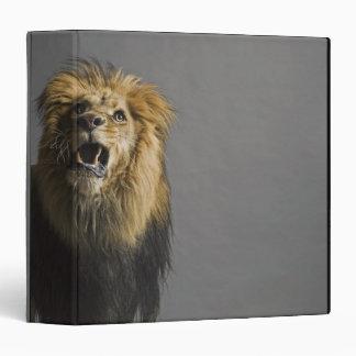 Lion roaring binders