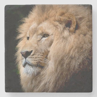 Lion Stone Coaster