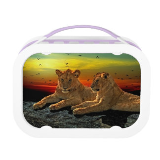 Lion Style Lunchbox