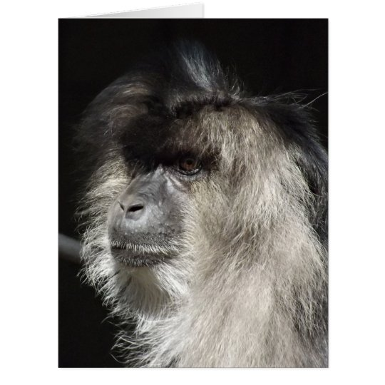 Lion-Tailed Macaque Portrait Card