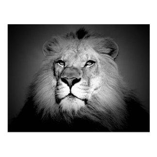 Lion the King Postcard