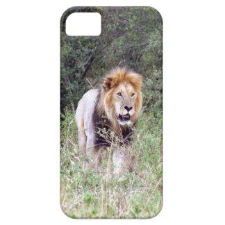 lion walk iPhone 5 cases