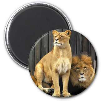 Lion - Why are you sitting on Me? Magnet