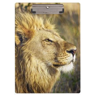 Lion Wild Animal Wildlife Safari Clipboards
