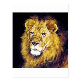 Lion wild cat proud strong regal postcard