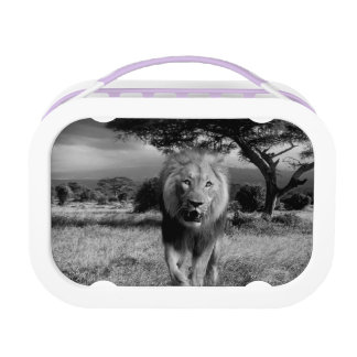 Lion Wildcat Lunch Boxes