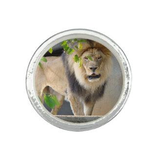 Lion Wildlife Ring