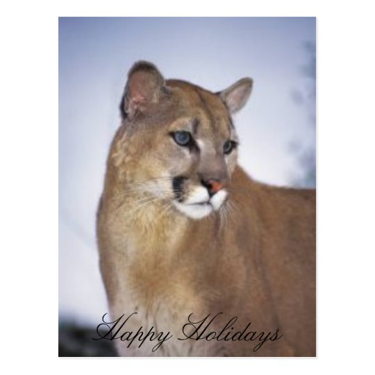 lioness2, Happy Holidays Postcard