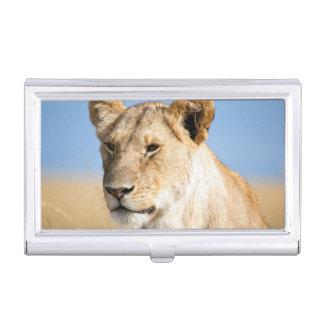 Lioness against blue sky business card case