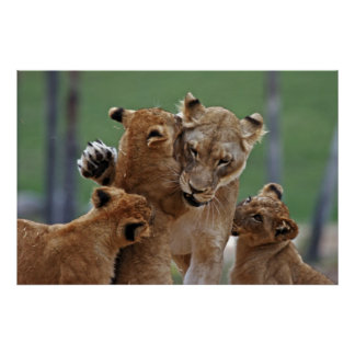 Lioness and Her Cubs Poster