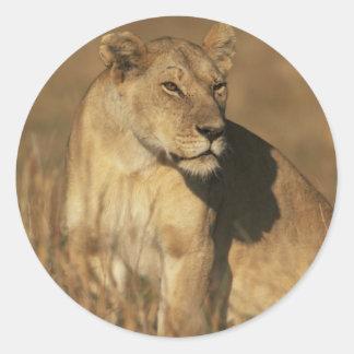 Lioness Camouflaged Classic Round Sticker