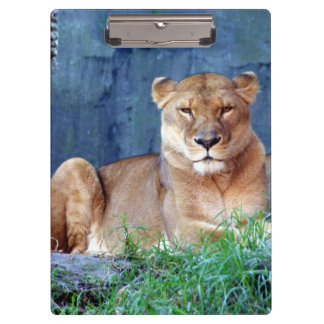 Lioness Clipboard