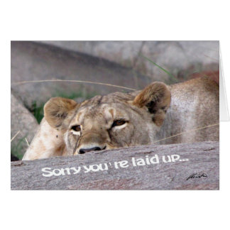 Lioness 'laid up' card