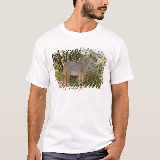 lioness lion, Panthera leo, Kgalagadi T-Shirt