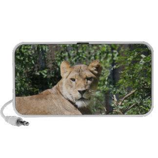 Lioness Notebook Speaker