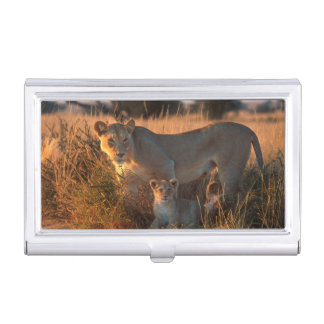 Lioness (Panthera Leo) And Cub Case For Business Cards