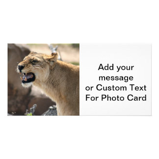 Lioness - Queen of the Jungle Personalized Photo Card