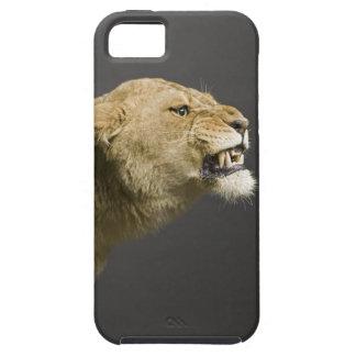 Lioness roaring 2 iPhone 5 case