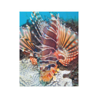 Lionfish Close-up Photo Canvas