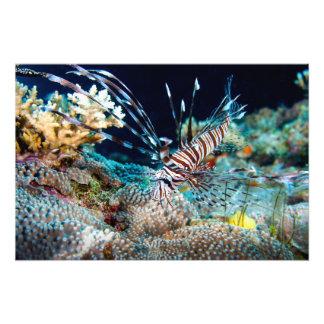 Lionfish Print