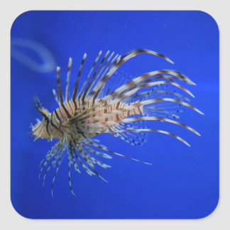 Lionfish Square Sticker