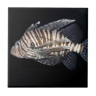 Lionfish Tile
