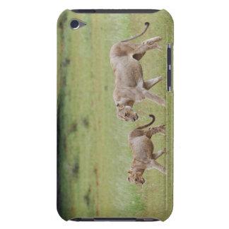 lionne de marche avec des petits animaux, lion, coque iPod Case-Mate