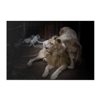 Lions Acrylic Wall Art