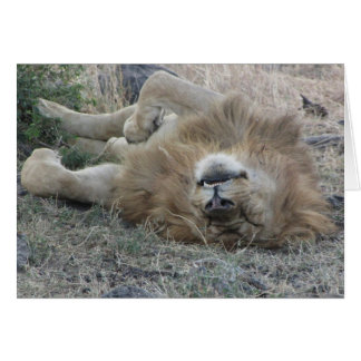 Lions Club, Lion sleeping (Masai Mara, Kenya) Card