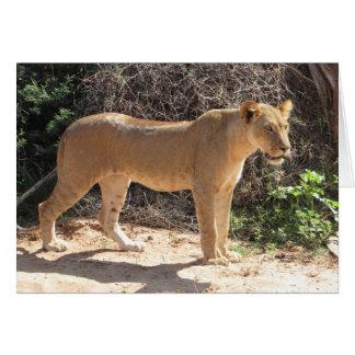 Lions Club, Lioness Standing (Samburu) Card