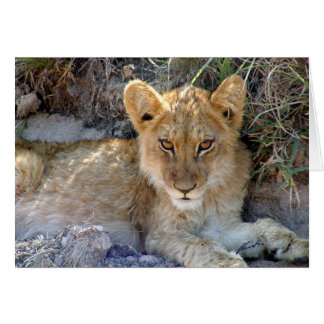 (Lions Clubs) Lion Cub (Sabi Sabi, South Africa) Card