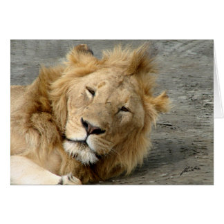 (Lions Clubs) Lion (Ngorongoro) Card