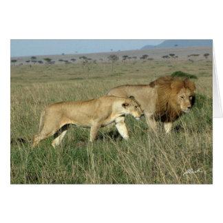 (Lions Clubs) Lion Pair (Masai Mara, Kenya) Card
