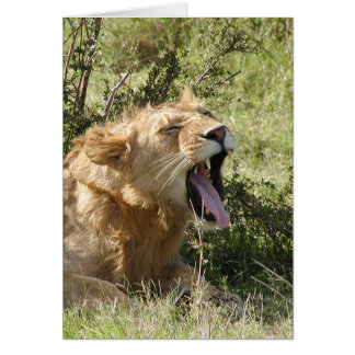 (Lions Clubs) Lion yawning - Masai Mara Card