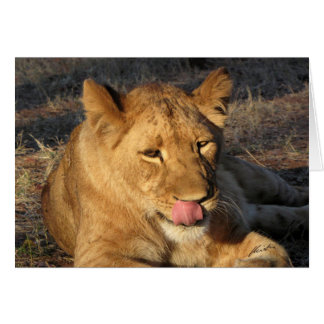 (Lions Clubs) Lioness licking her nose (Vic Falls) Card