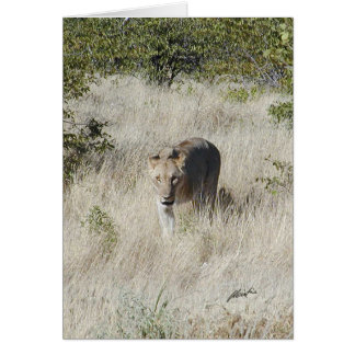(Lions Clubs) Lioness stalking (Etosha, Namibia) Card