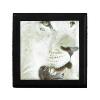 Lion's Face Close-up! Gift Box