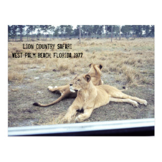 Lions Florida Safari Amusement Park 1977 Postcard