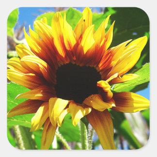 Lion's Mane Sunflower Square Stickers