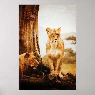 Lions Print