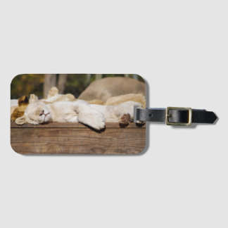 Lions Sleeping in the Sun Luggage Tag