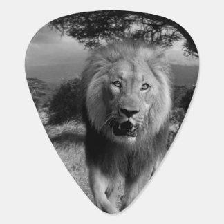 Lions Wildcat Pick