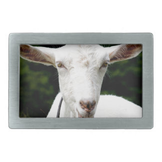 Lipstick on a goat rectangular belt buckles
