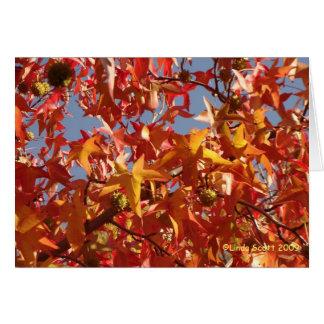 Liquid Amber Leaves Card