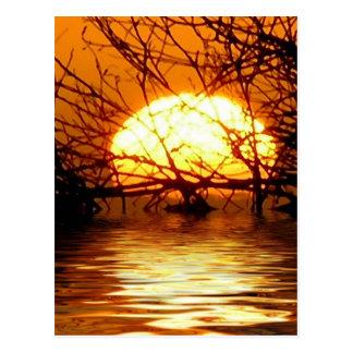 Liquid Sunset Vertical  Postcard