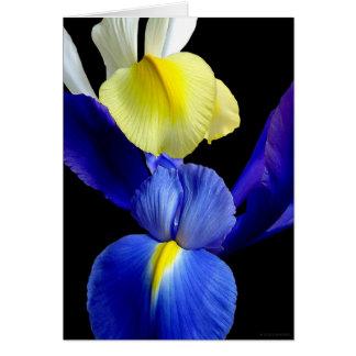L'iris bleu et jaune fleurit 4b cartes de vœux